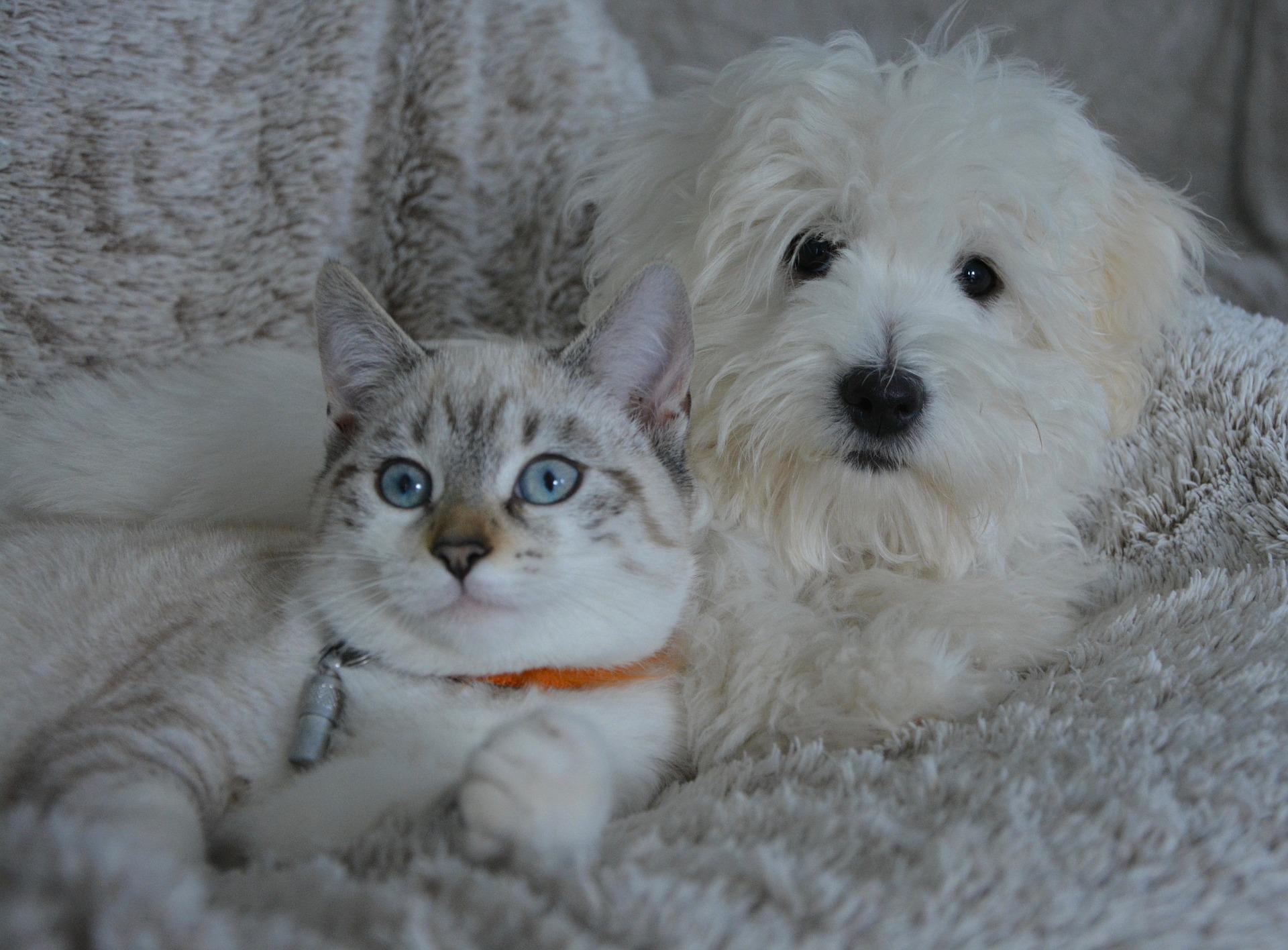 Pet Custody Coming to Illinois in 2018