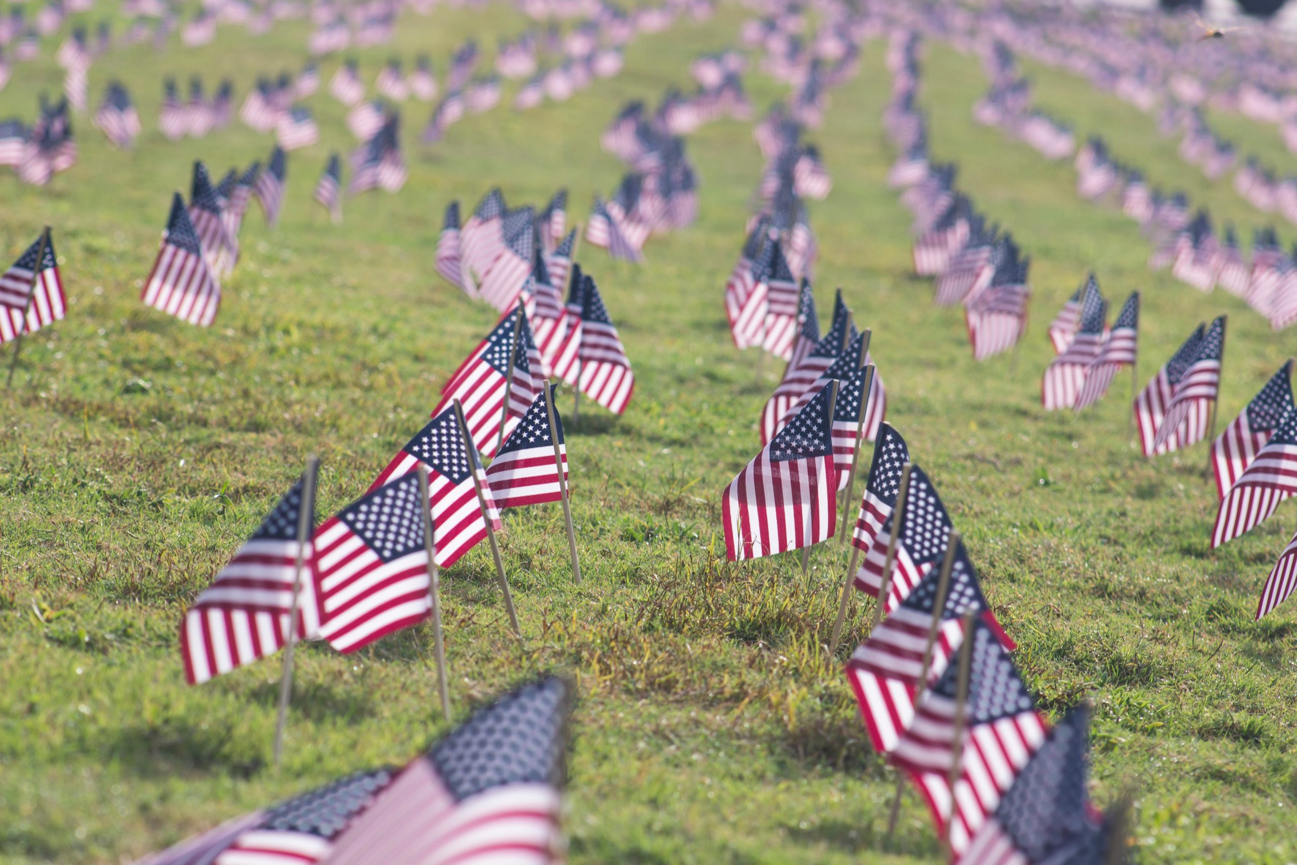 selective focus photography of USA flaglets planted on ground